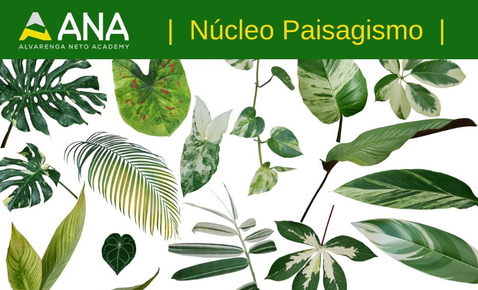Curso de Botânica Aplicada ao Paisagismo - Anacademy