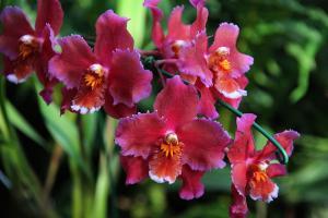 curso de orquideas no paisagismo; como utilizar orquideas no paisagismo