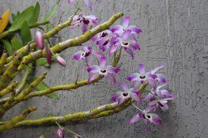 como utilizar orquideas no paisagismo